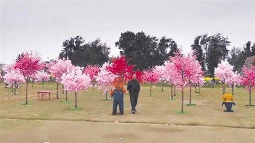 中國大陸辦「櫻花旅遊節」 現場竟是滿滿塑膠假花圖/翻攝自微博