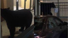 美國,黑熊,熊,旅館,入侵,Kim Vastola 圖/翻攝自臉書