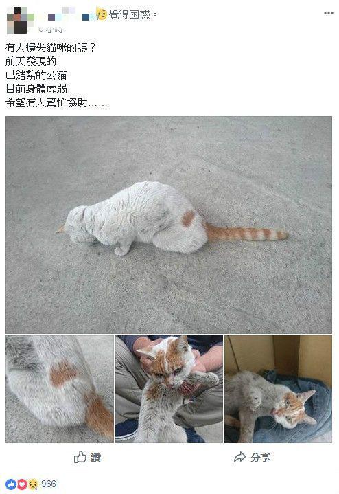 花蓮雲翠主委走失的貓兒子回家了(圖/翻攝自花蓮人臉書)