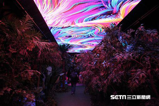 垂楊介星光隧道,韓國旅遊,丹陽。(圖/記者簡佑庭攝)