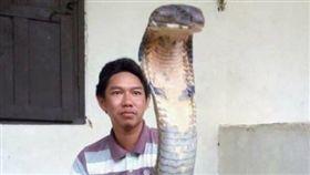 毒蛇,蛇頭,人臉,造假,眼鏡王蛇,印尼(圖/翻攝自臉書)