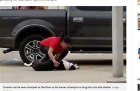 狗,遺棄,收容所,可憐(圖/翻攝自Daily Mirror)