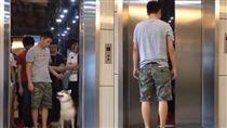 聰明哈士奇搭電梯(翻攝自YouTube)