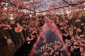 日本,IG,熱門景點,東京,櫻花,夜櫻,攝影師,照片 圖/翻攝自IG