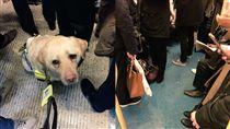 英國殘障車廂沒人讓位!任導盲犬滑倒 圖/翻攝自Kika_GuideDog推特