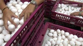戴奧辛蛋追一年找嘸污染源 蛋農嘆倒楣