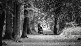 嬰兒車,推車,森林,步道,母子(圖/pixabay)