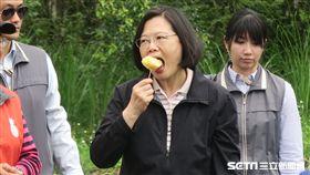 蔡英文總統前往富興村鳳梨公園,搭小火車到鳳梨田摘鳳梨。(圖/記者盧素梅攝)