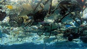 海洋垃圾,塑膠,太平洋垃圾帶(圖/翻攝自推特)