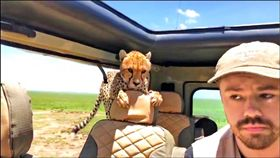 Elisa Jaffe KOMO,Britton Hayes,獵豹,非洲,Serengeti,舒夢蘭,台灣,聚焦全世界,主持人 圖/翻攝自臉書 https://goo.gl/Jcjtha
