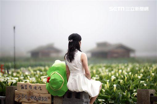 陽明山,連假,竹子湖,海芋,網美,打卡,IG 圖/北市產發局
