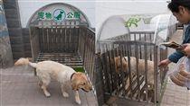 山西太原設狗公廁 網友:奇葩城市!人還沒管好就管狗(圖/翻攝自中新網)