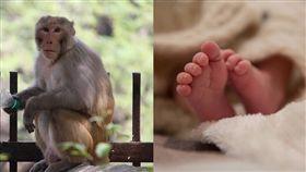 猴子偷抱人類寶寶示意圖/pixabay