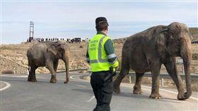 西班牙,大象,車禍,起重機,馬路(圖/推特)