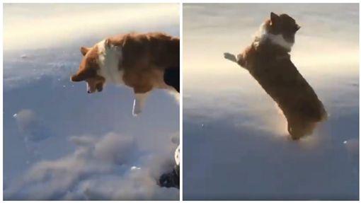 柯基犬疑似被從飛機上丟下雲端(圖/翻攝自UNILAD臉書)