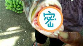 印尼,西巴布亞省,魚,人齒魚,牙齒,老師,皇帝魚(圖/翻攝自太陽報)