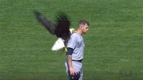 老鷹飛進球場停在手James Paxton肩膀上。(圖/翻攝自大聯盟官網)