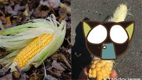 玉米,玉米黑粉菌,真菌,雲林,斗六,斗六人文社交圈,高級, 圖/翻攝自臉書