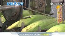薪動大未來/39元真空玉米棒 闖出2億玉米王國