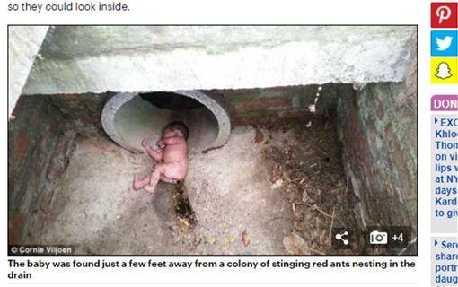 誰這麼狠心?女嬰被棄陰暗水溝 紅火蟻窩旁奇蹟存活 圖/翻攝每日郵報