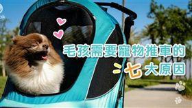 PetTalk/毛孩需要寵物推車的七大原因(勿用)