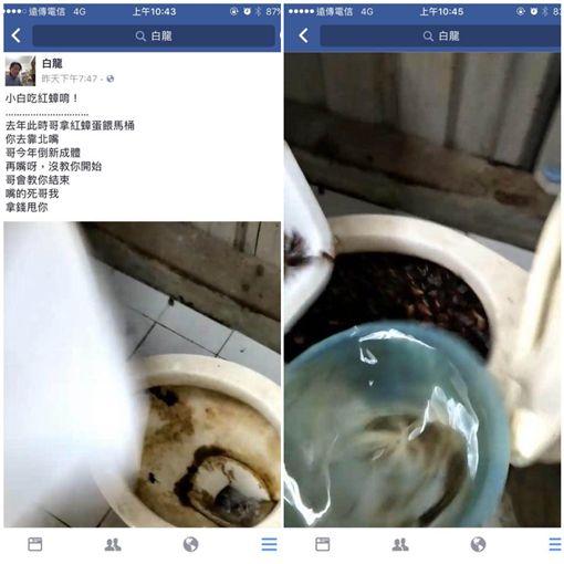 白龍,蟑螂,謝瑋晏,養殖場,沖馬桶(圖/翻攝自爆料公社)