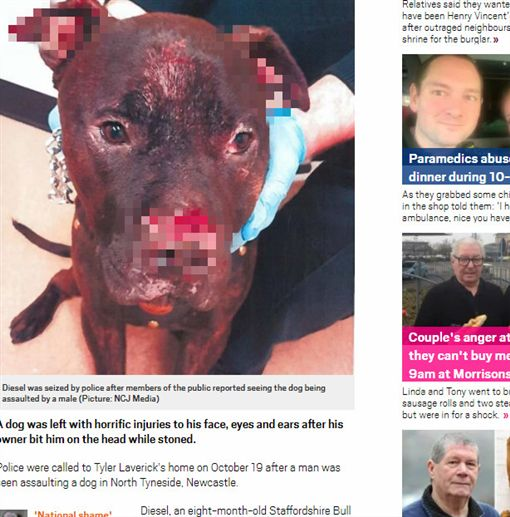 英國,狗狗,咬傷,吸毒,主人,受傷,抓傷,神智,鬥牛㹴,大麻http://metro.co.uk/2018/04/15/dog-pictured-horrific-injuries-owner-bit-getting-stoned-7468377/