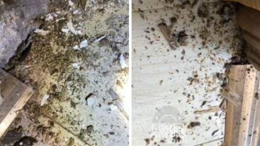 中國大陸,地板,白蟻,木製,傢俱(圖/翻攝自微博)