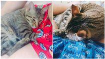 貓咪,可愛,主子,小三,褲檔(圖/貓咪也瘋狂網友Celeste Hsu授權)