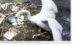 環境,哥本哈根,丹麥,天鵝湖,垃圾,人類,動物,天鵝,產卵 https://www.dr.dk/nyheder/regionale/hovedstadsomraadet/billeder-svanens-skralderede-vaekker-bekymring