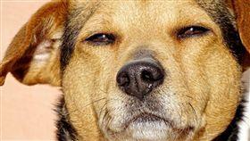 寵物,狗,貓,保險,肥胖,過重,受傷,理賠,減肥,英國 圖/翻攝自Pxhere https://goo.gl/U6HUpQ