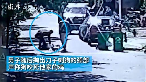 大陸一隻阿拉斯加雪橇犬遭割喉 (圖/翻攝自澎湃新聞)