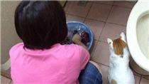 媽媽撂狠話「敢帶貓回來就丟了牠」 結果比主人更寵牠! 圖/翻攝自dcard