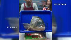 直播買魚騙1200