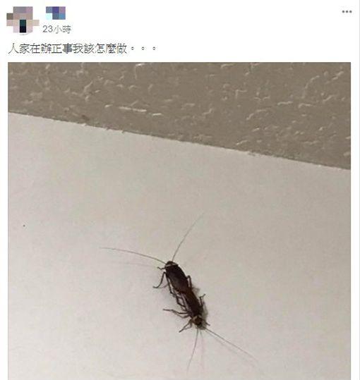 蟑螂交配、蟑螂辦正事/臉書爆廢公社