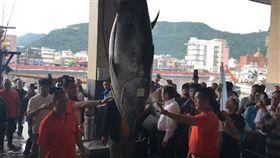 宜蘭第一鮪重達211公斤 拍賣價189萬創最高紀錄 黑鮪魚 圖/翻攝畫面