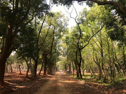 營造森林裡的花博 體驗與樹對話