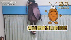 巨大蟑螂從天而降!淡定媽神反應反撩兒子