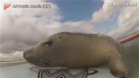 小海豹霸占衝浪板 站不穩也要玩