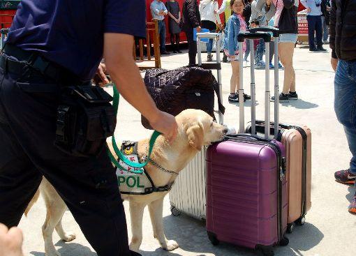 澎警局票選最萌警犬(3)澎湖縣政府警察局警犬隊在去年4月成立,今年配合「六三禁煙節」,首度在警局五德人力發展中心舉辦成立週年慶,展示警犬近年來訓練的成果,並將公開票選「最萌警犬」。圖為警犬在碼頭執勤的情形。(資料照片)中央社 107年4月30日