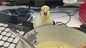 鸚鵡偷喝湯