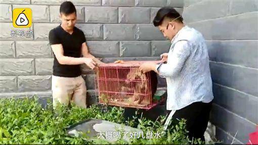 內蒙古,虐狗,水泥,生葬,狗狗(圖/https://pets.ettoday.net/news/1160087)
