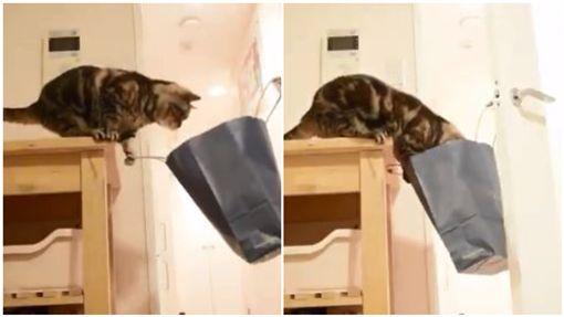 貓,喵星人,紙袋,門把,破裂,紙箱(圖/翻攝自zawakoz推特)