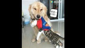 汪汪把貓咪叼出家門 主人:有話好說 (圖/翻攝自騰訊視頻)