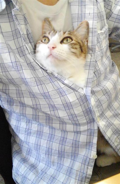 圖說:日本,辦公室,貓,流浪貓,領養,浪浪,工作福利,辦公環境(圖/翻攝自The Awesome Daily http://theawesomedaily.com/japanese-company-pays-employees-for-every-cat-they-rescue/)