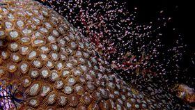 屏東,珊瑚