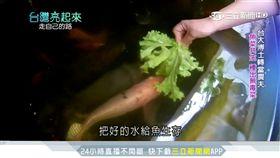 台大博士棄醫從農 以「魚菜共生」種出無毒菜