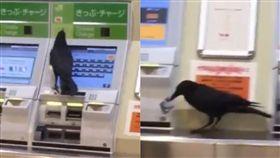 烏鴉搶信用卡買車票(翻攝twitter)
