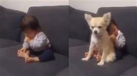 狗,小孩,睡覺,保母,靠枕 圖/翻攝自爆料公社3.0YouTube