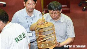 台北市議員林世宗送上鳥籠。 (圖/記者林敬旻攝)